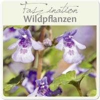 Essbare Wildpflanzen - leckere und gesunde Rezeptideen