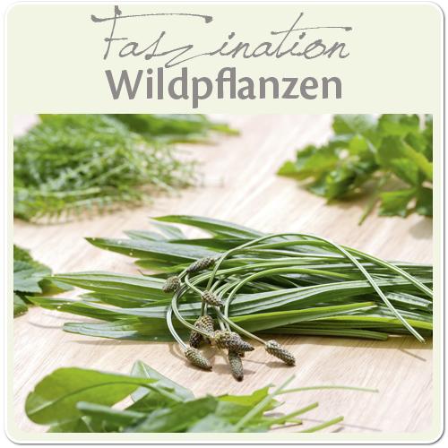 Wissenswertes_ueber_Wildpflanzen_2_500x500